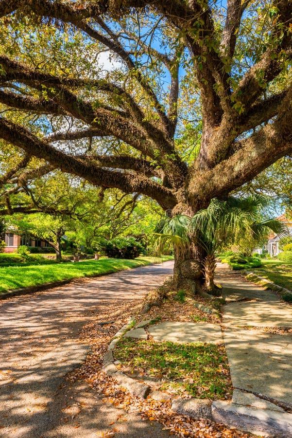 Árvore gigante na rua em Alabama móvel fotos de stock royalty free