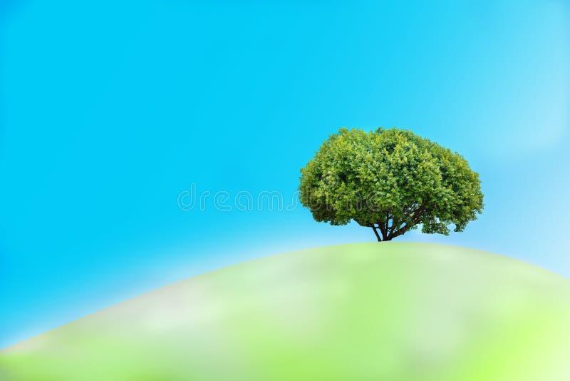 Árvore grande bonita na grama verde e no céu azul para o fundo com espaço da cópia para seu texto fotografia de stock royalty free