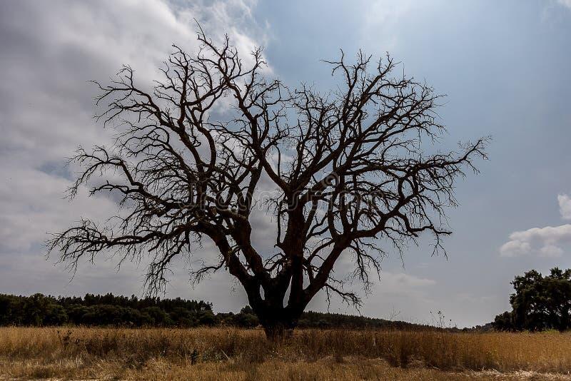 Árvore grande despida fotografia de stock royalty free
