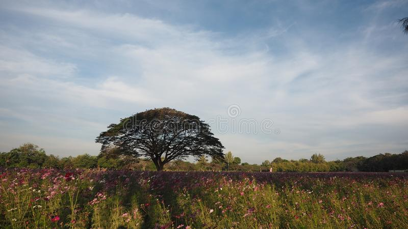 Árvore grande no parque imagens de stock