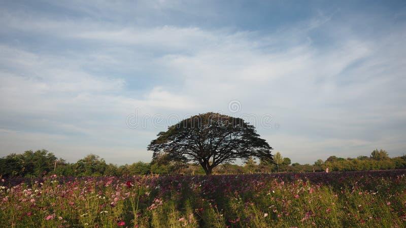 Árvore grande no parque imagem de stock