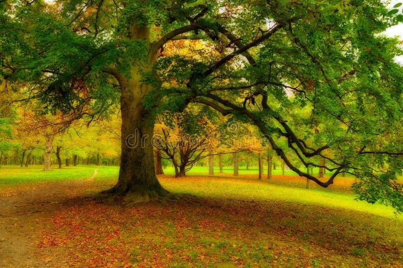 Árvore grande no parque no outono foto de stock
