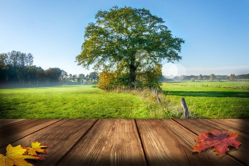 Árvore grande no prado verde com névoa da manhã - tabela de madeira para a colocação do produto no primeiro plano imagem de stock royalty free