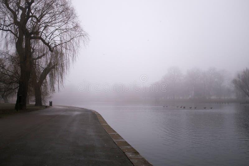 A árvore grande perto do lago, regentes estaciona, Londres fotos de stock