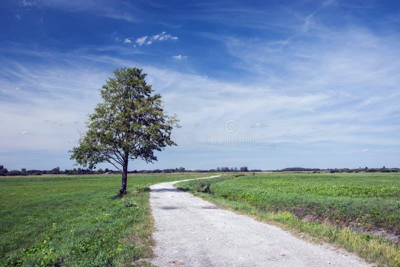 Árvore grande só pela estrada secundária, pelo prado verde e pela nuvem em t fotos de stock