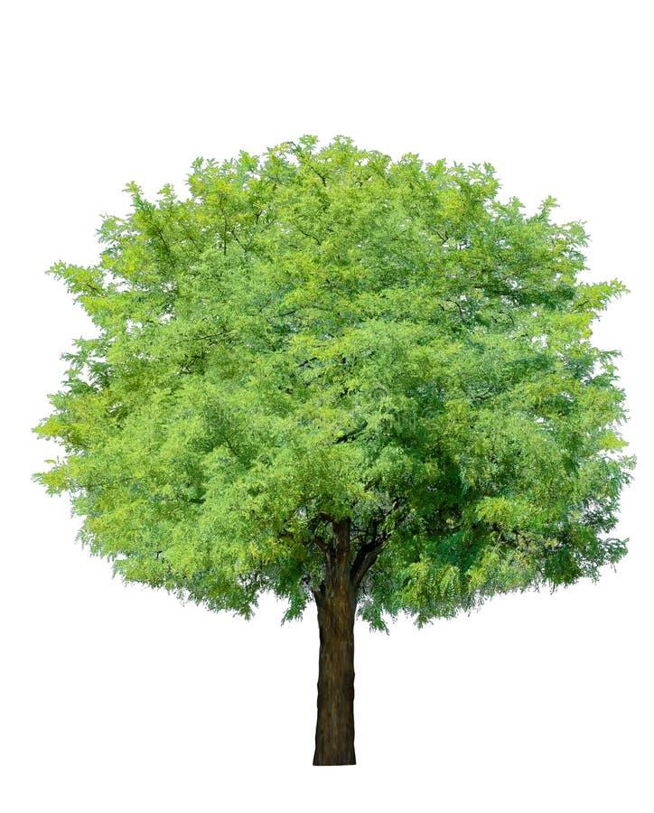 Árvore idílico imagens de stock royalty free