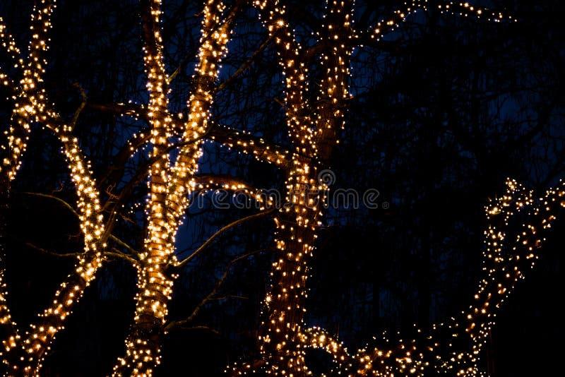 Árvore iluminada pelo Natal à noite contra fundo escuro fotos de stock