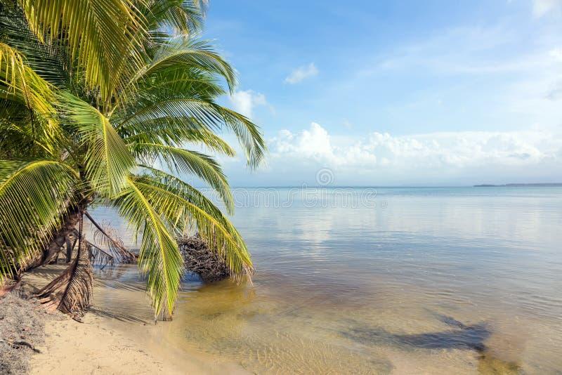 Árvore inclinada na costa das caraíbas fotografia de stock royalty free