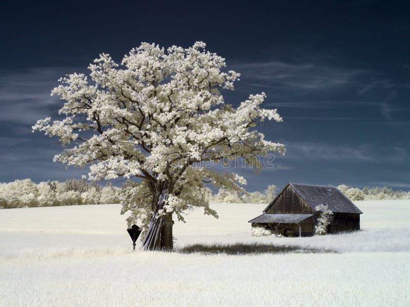 Árvore infravermelha fotografia de stock