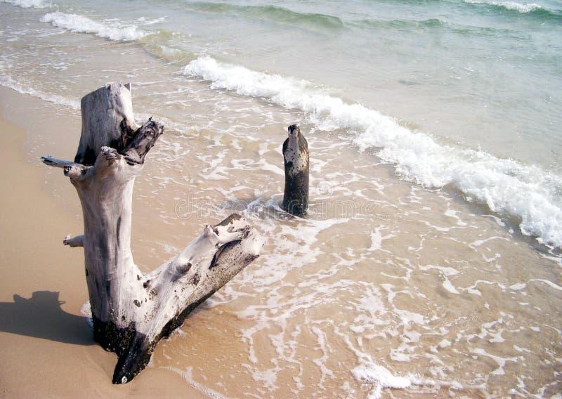 Download Árvore inoperante imagem de stock. Imagem de praia, surf - 100229