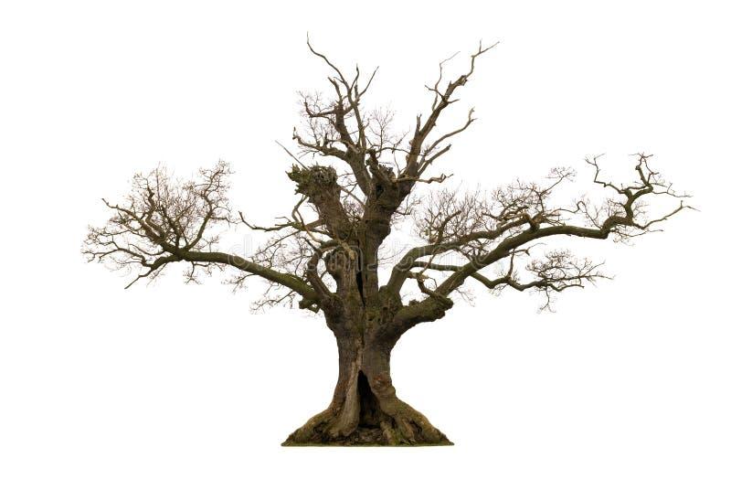 Árvore inoperante fotografia de stock royalty free