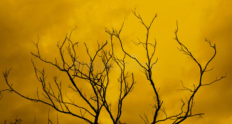 árvore inoperante com um céu vermelho assustador surreal fotografia de stock royalty free