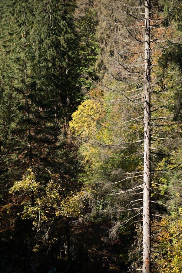 Árvore inoperante em uma floresta foto de stock royalty free