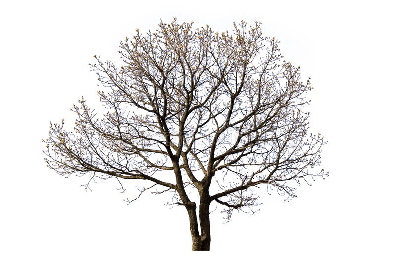 Árvore inoperante isolada imagens de stock royalty free