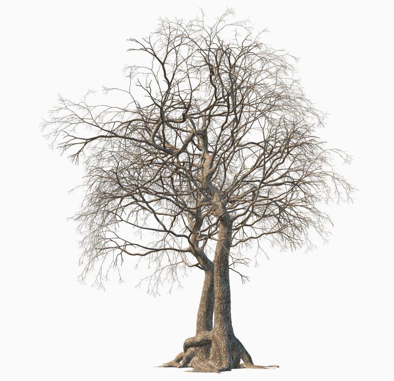 Árvore inoperante isolada no fundo branco ilustração stock