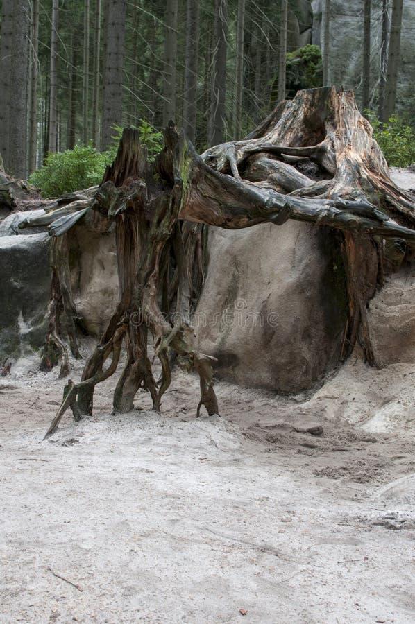 Árvore inoperante na floresta fotografia de stock