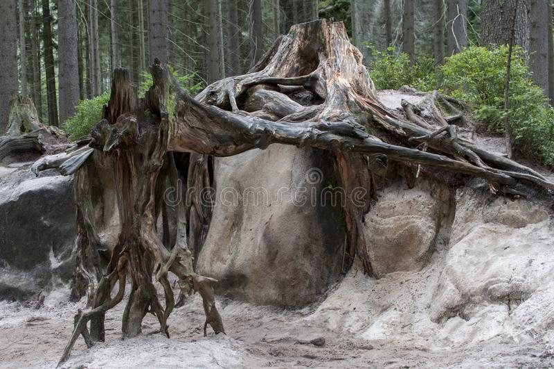 Árvore inoperante na floresta imagem de stock