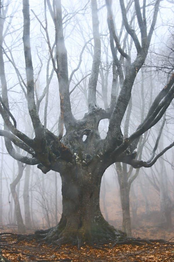 Árvore inoperante na floresta nevoenta foto de stock