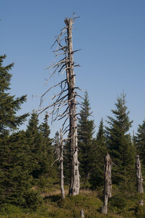 Árvore inoperante na montanha imagem de stock royalty free