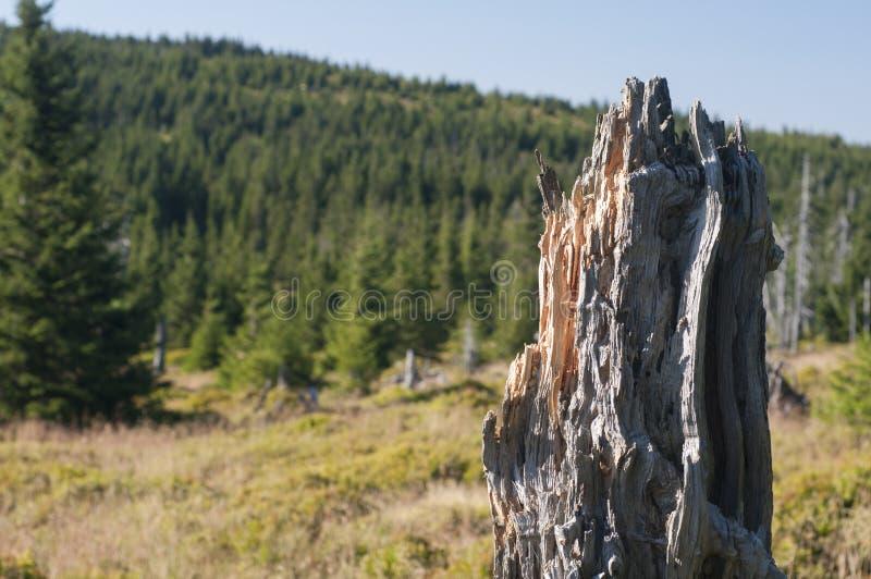 Árvore inoperante na montanha foto de stock