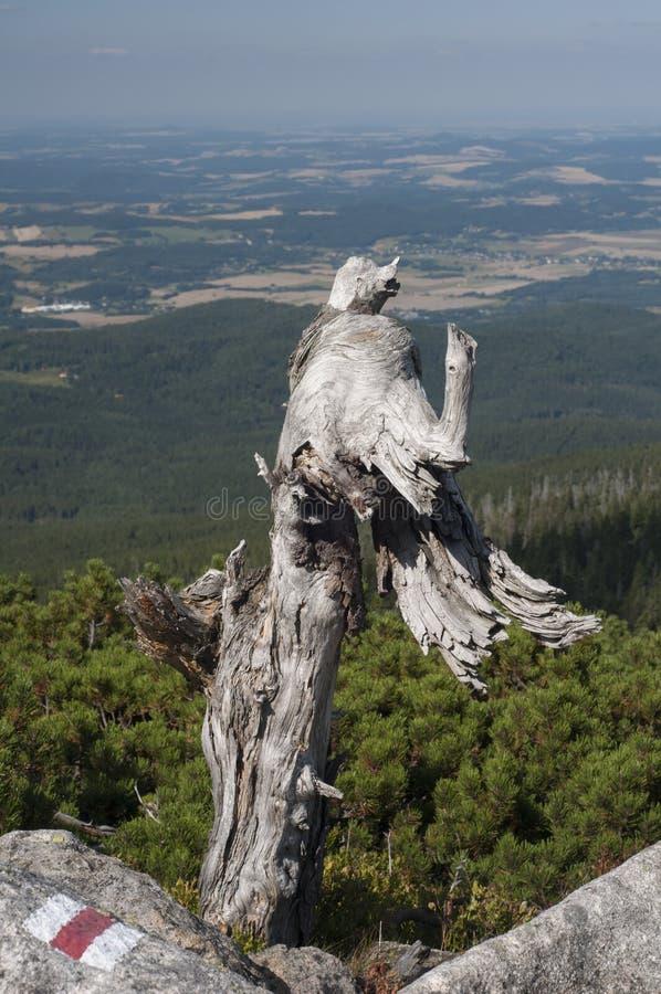 árvore inoperante na montanha - Karkonosze fotografia de stock royalty free