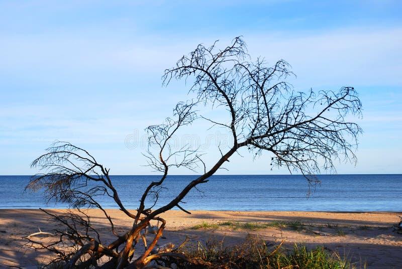 Árvore inoperante na praia foto de stock royalty free