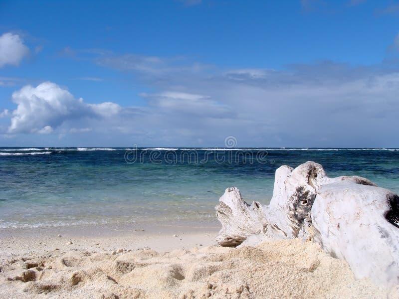 Árvore inoperante na praia imagem de stock royalty free