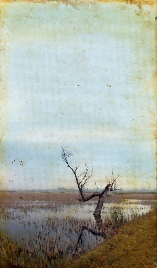 Árvore inoperante no pântano no fundo de Grunge imagem de stock royalty free