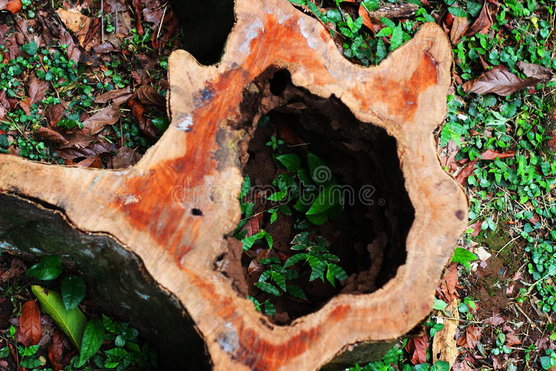 A árvore inoperante oca no parque foto de stock royalty free