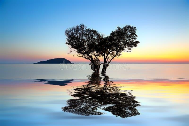 árvore inoperante sozinha na forma do coração e submersa parcialmente dentro foto de stock royalty free