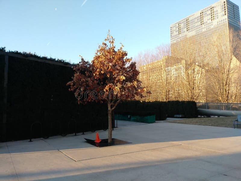 A árvore invicto imagem de stock
