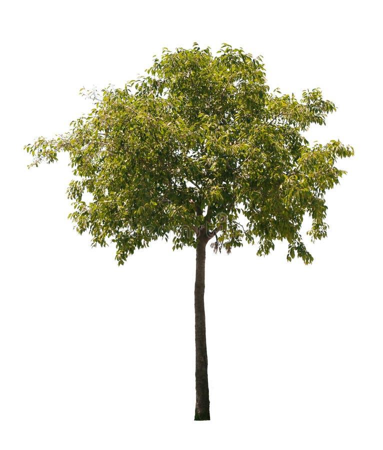 Árvore isolada