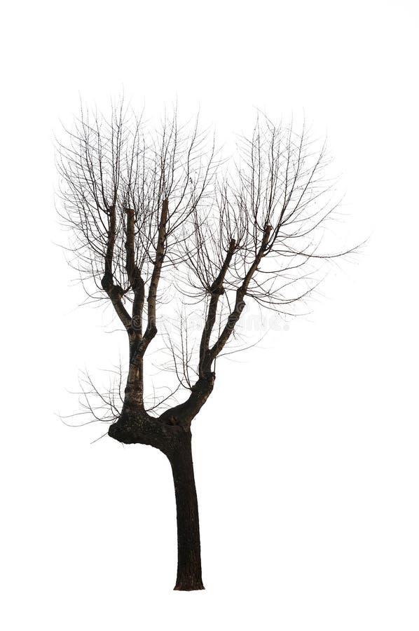 Árvore isolada fotos de stock royalty free