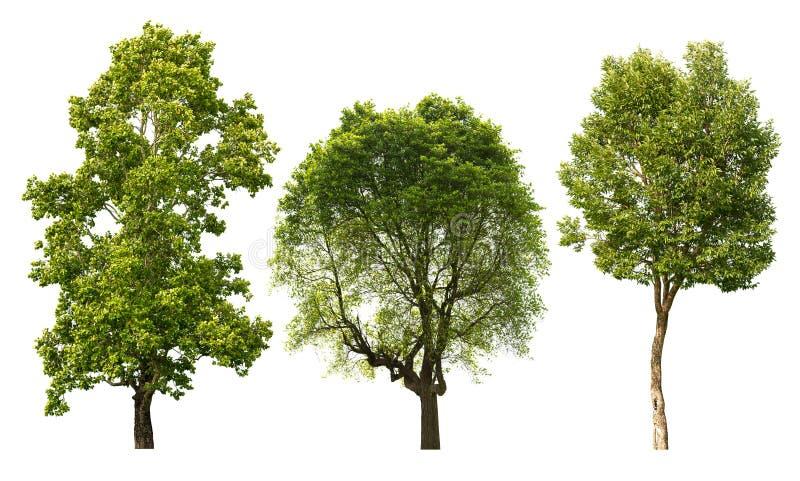 Árvore isolada imagens de stock