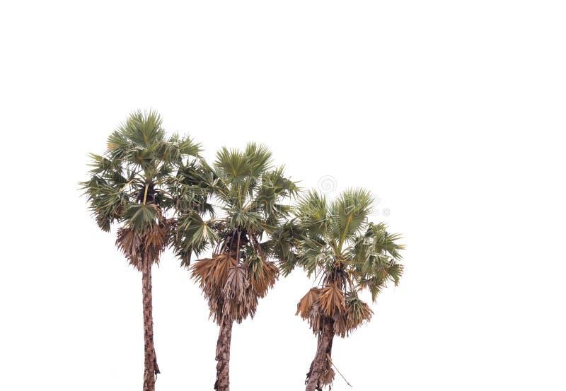 Árvore isolada no fundo branco imagem de stock
