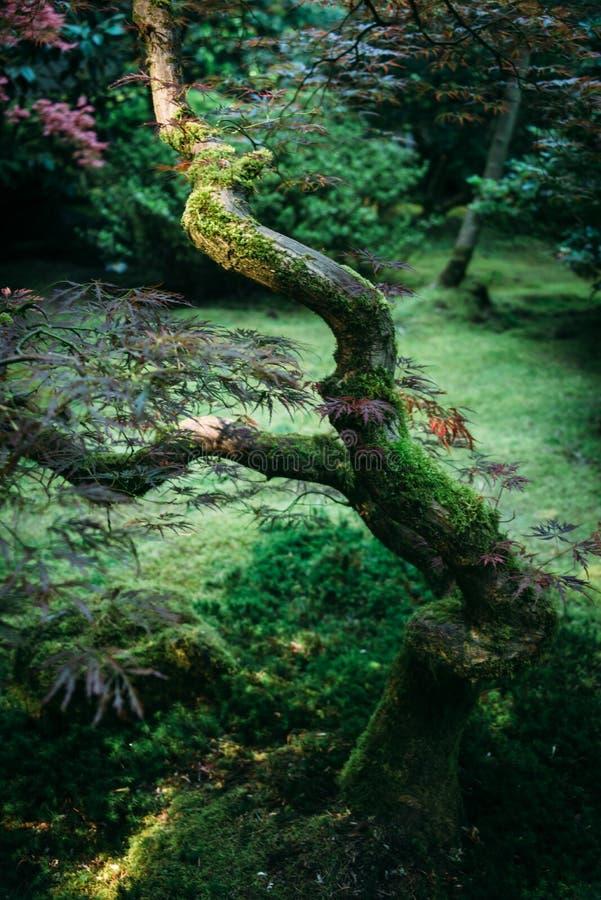 Árvore japonesa imagem de stock