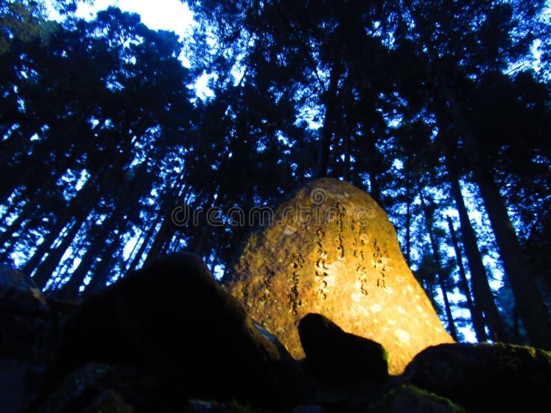 Árvore japonesa velha na noite imagens de stock royalty free