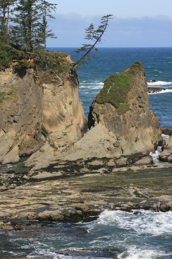 Árvore litoral Windswept foto de stock