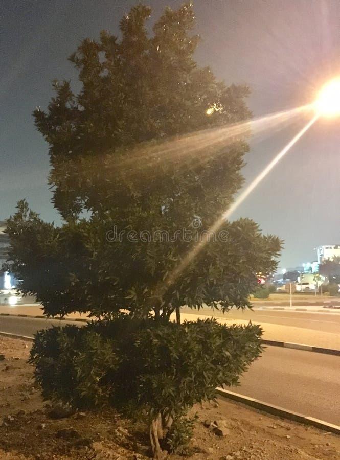 Árvore longa ao lado da estrada imagem de stock royalty free