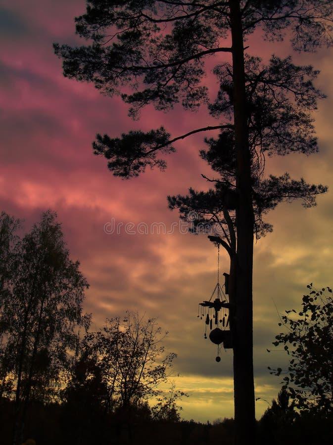 Árvore mágica fotografia de stock