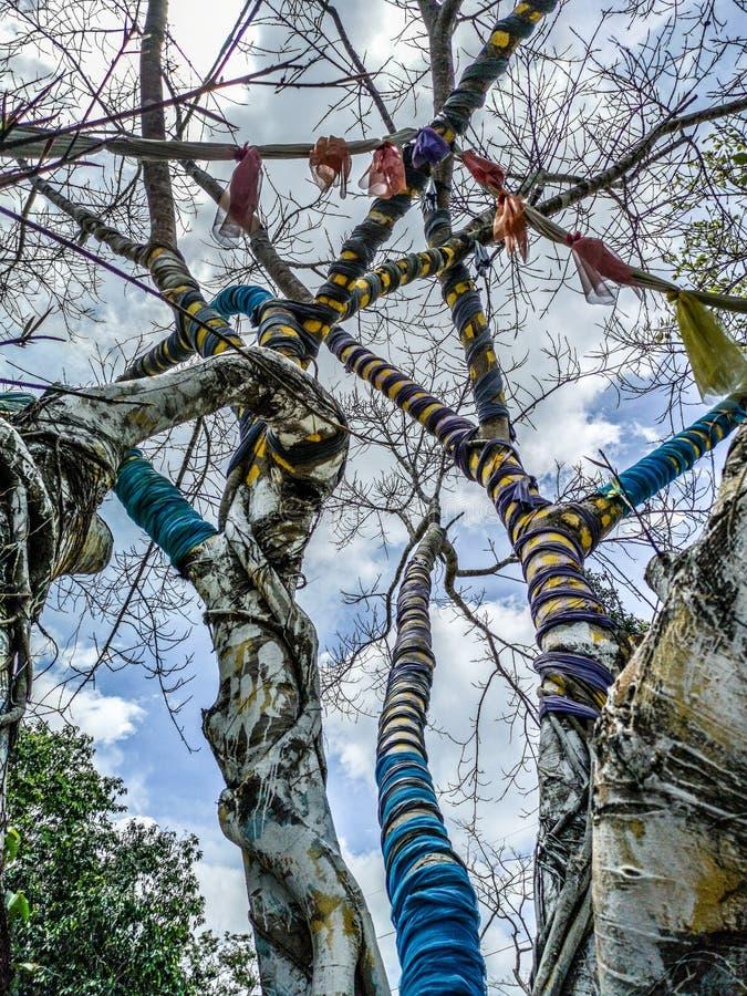 Árvore mágica cujos os ramos são cercados por telas coloridas no parque de Nan Riverside Art Gallery fotografia de stock