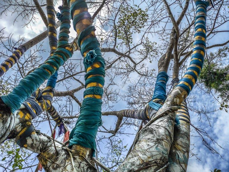 Árvore mágica cujos os ramos são cercados por telas coloridas no parque de Nan Riverside Art Gallery imagens de stock
