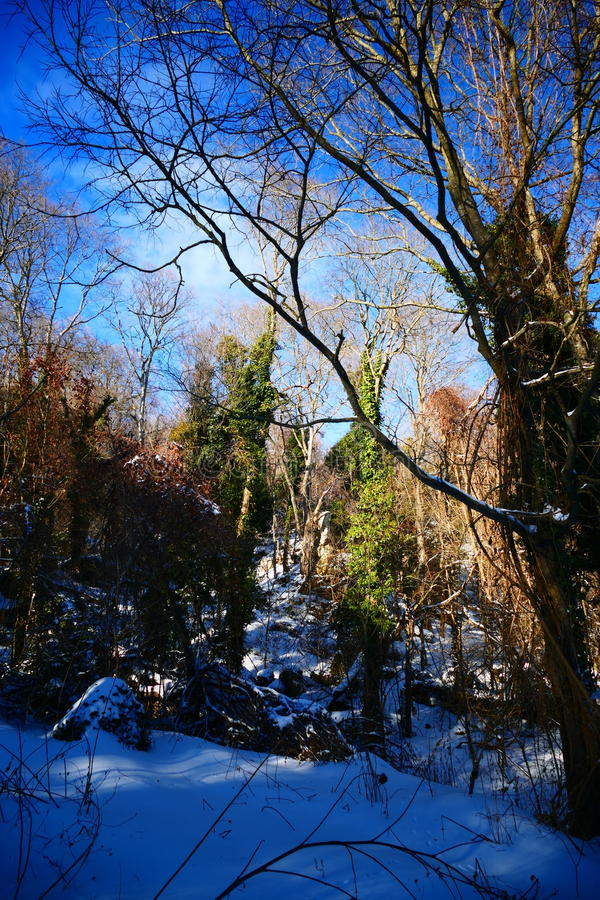 Árvore mágica do inverno imagem de stock