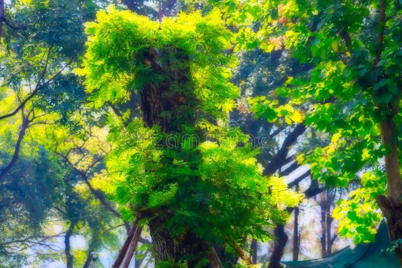 Árvore mágica no parque Banguecoque do lumpini fotografia de stock royalty free