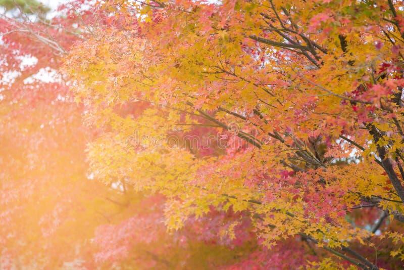 Árvore múltipla da cor da estação do outono fotografia de stock royalty free