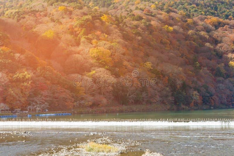 Árvore múltipla da cor da estação do outono na parte dianteira do rio da montanha fotos de stock
