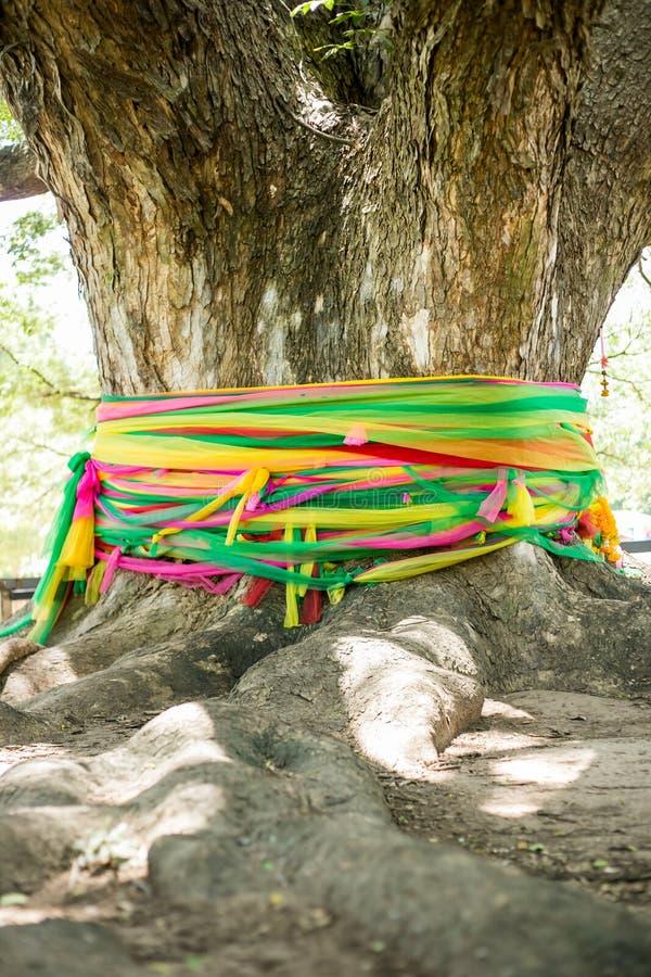 A árvore a maior em Kanchanaburi É um lugar surpreendente a visitar imagem de stock