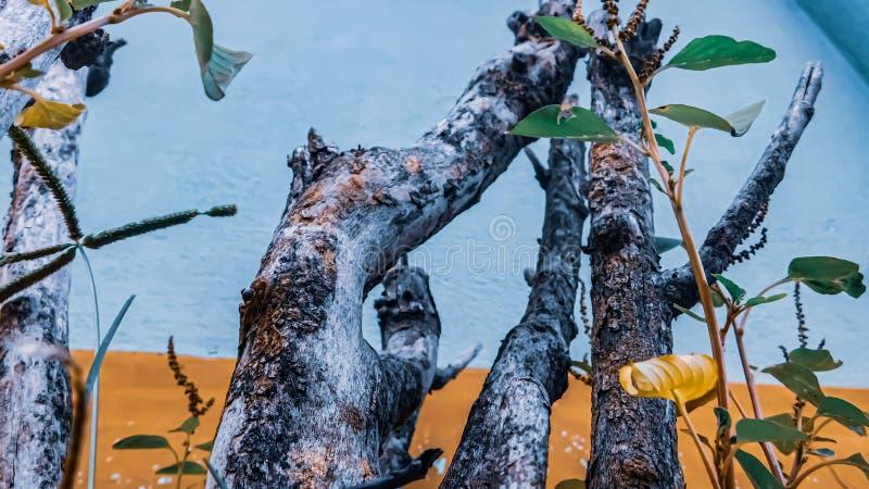A árvore a mais bonita imagem de stock