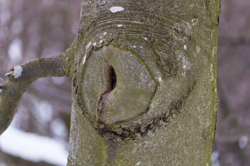 Árvore mais estranha fotos de stock royalty free
