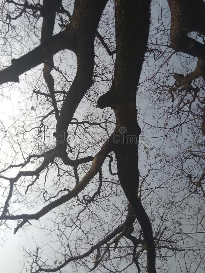 A árvore a mais velha imagens de stock